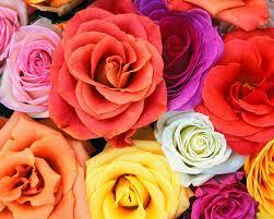 arranjos de flores e arranjos florais
