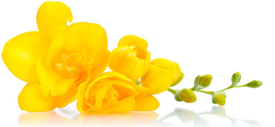 O Significado e a cor das flores