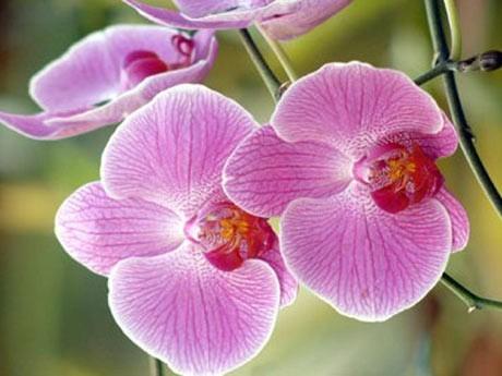 Dicas Para as Plantas de Interior Darem Mais Flores